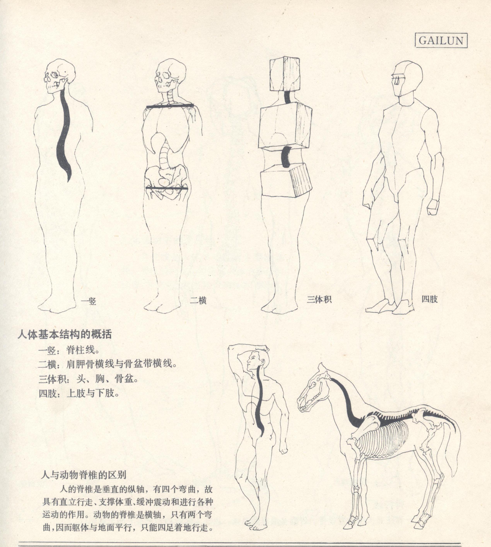 【人体结构教程1】