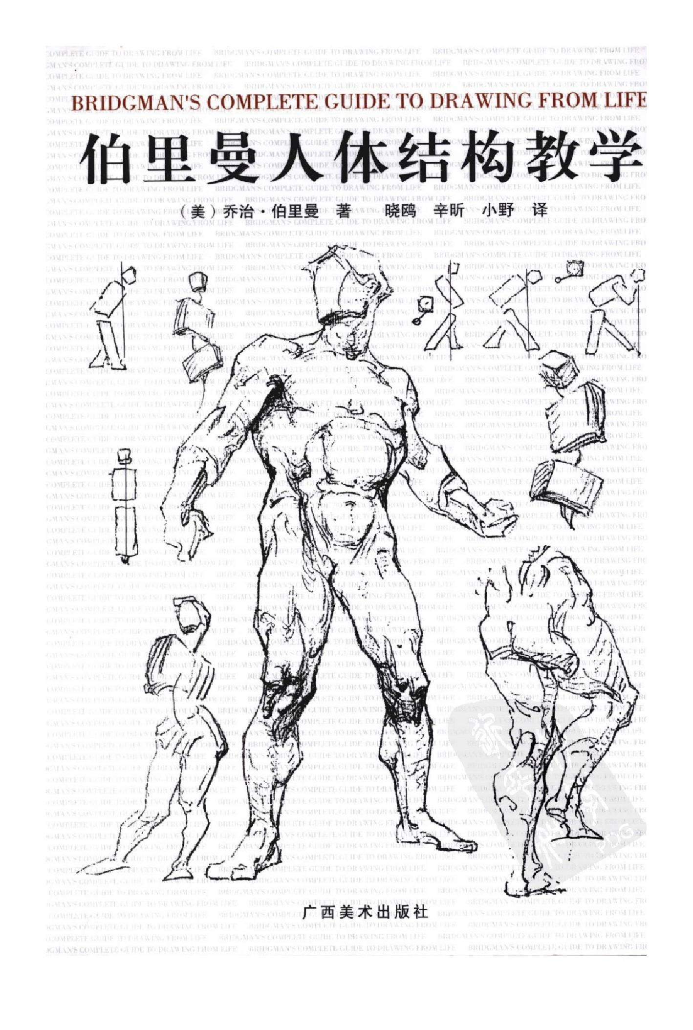 【人体结构伯里曼】