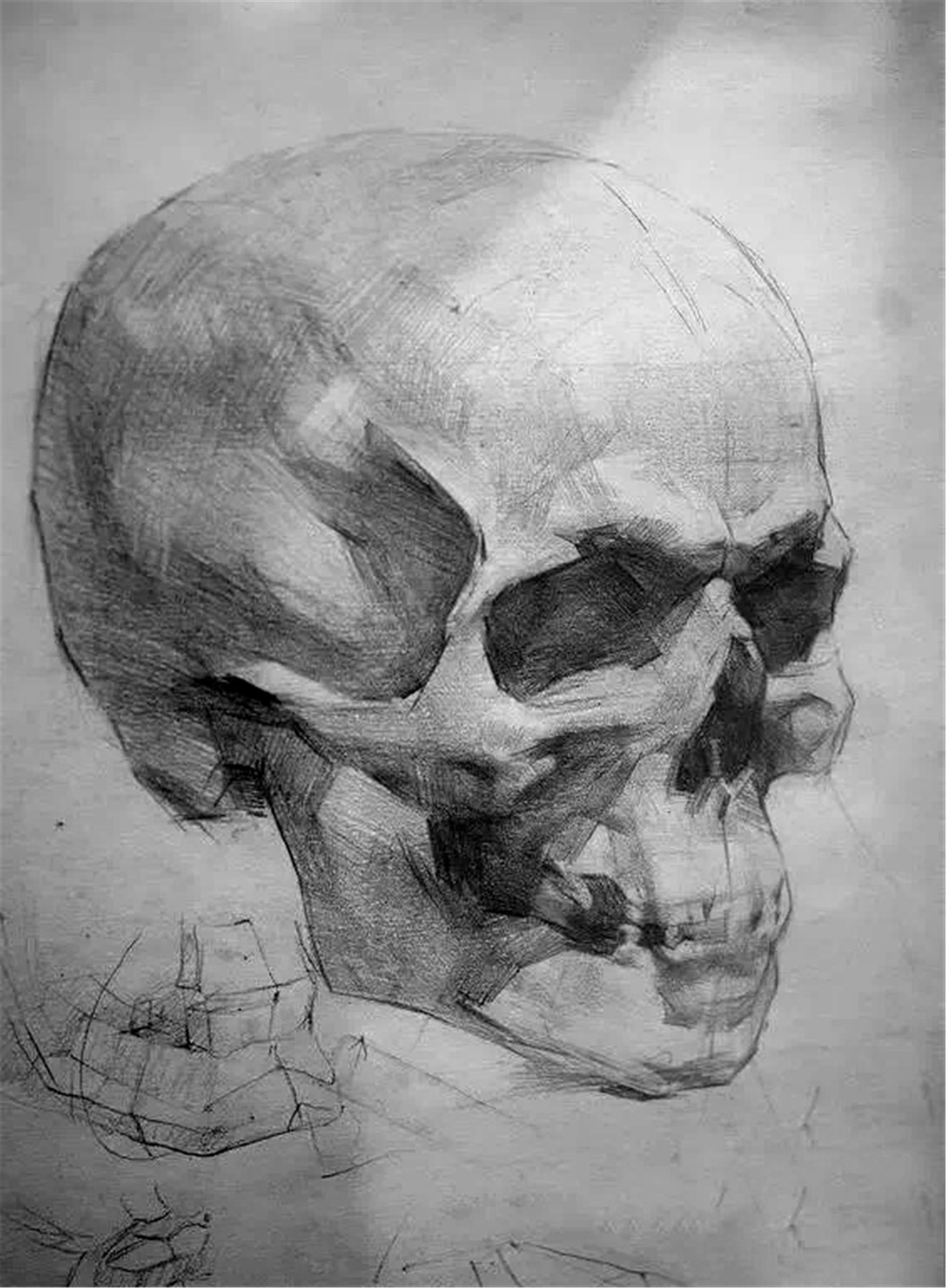 第一章:素描人像普及课  第一节:头骨的形体结构体面认识(必修作业)