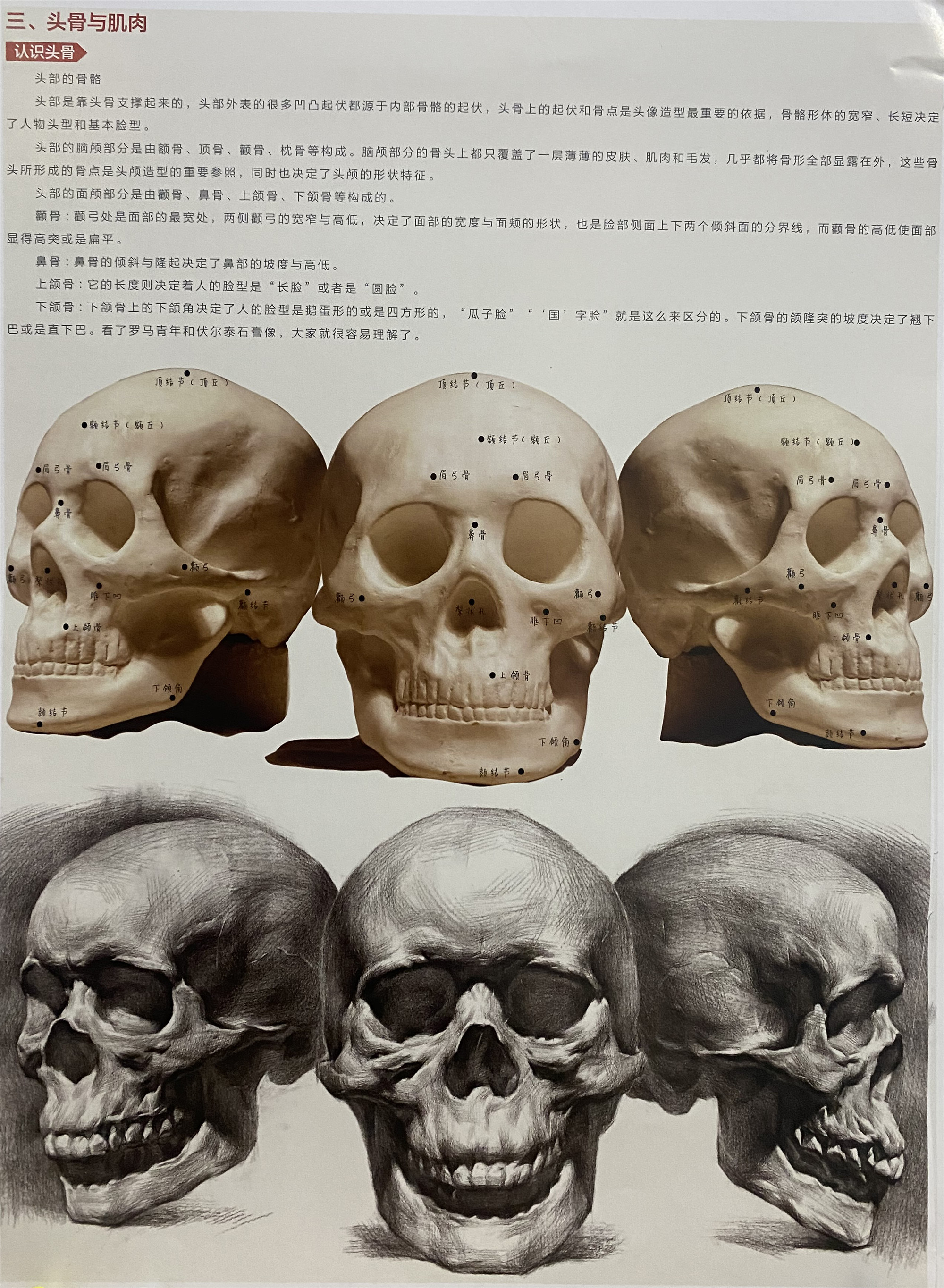 第一章:素描人像普及课  第一节:头骨的形体结构体面认识(选修作业)