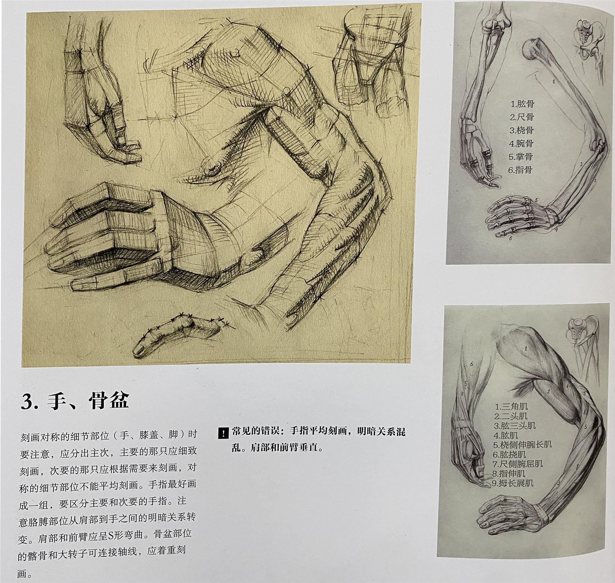第一章:素描人像普及课  第四节:人物半身像结构体面认识理解,整体透视和空间朝向(必