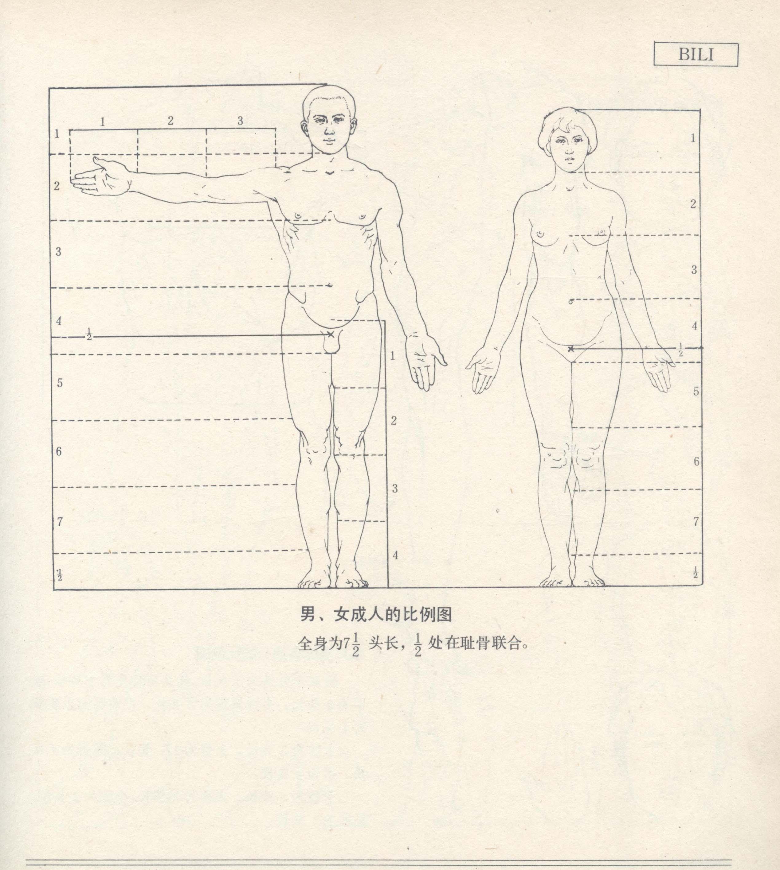 第1章:速写普及课  第3节:人体结构的基本框架比例及动态认识  【必修作业】