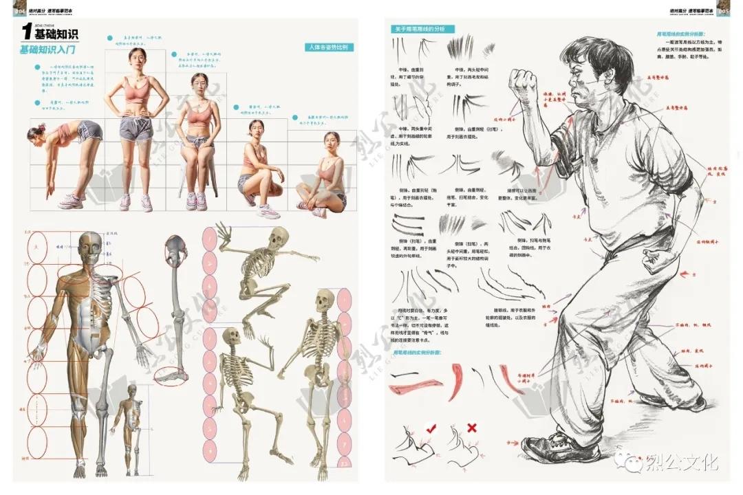 第1章:速写普及课  第4节:身体躯干的结构体面认识  【选修作业】