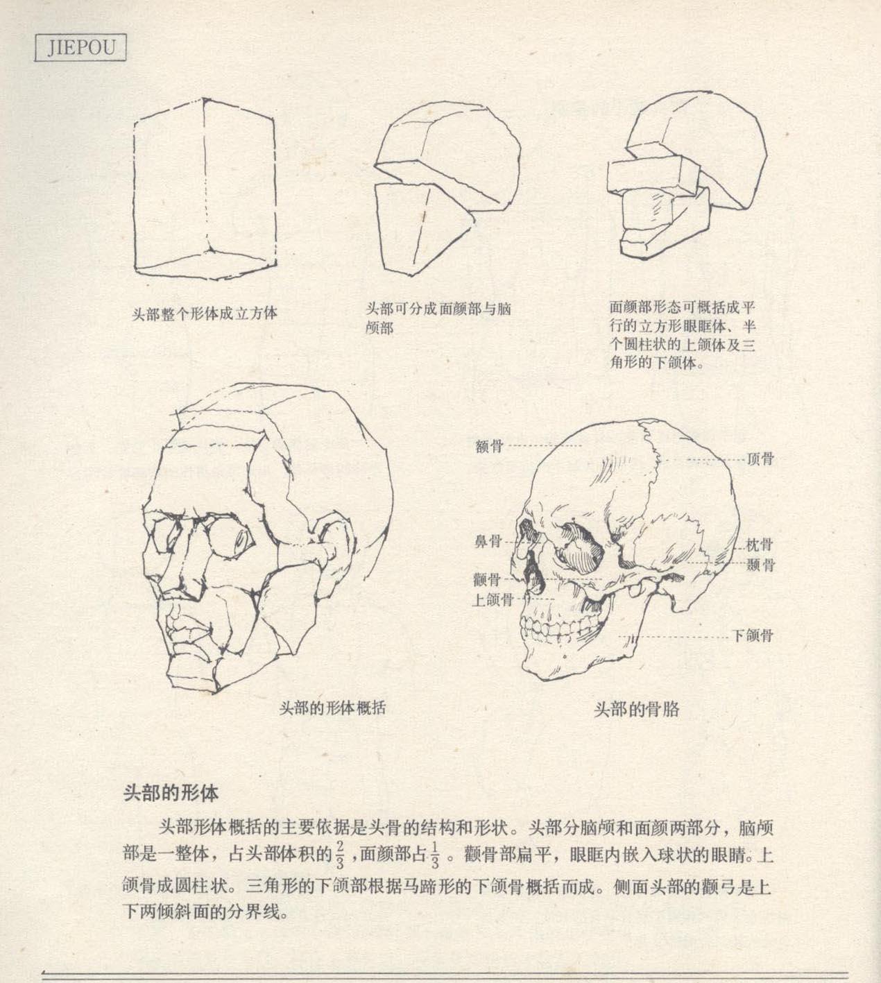 第1章:速写普及课  第5节:头手脚的结构体面认识  【参考素材】